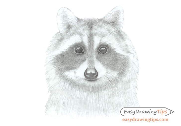 Raccoon face shading