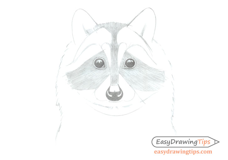 Raccoon face starting shading