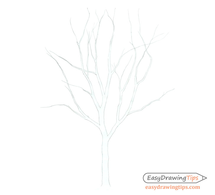 Tree trunk and branches drawing