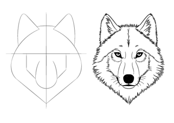 How to Draw a Wolf Face & Head Step by Step
