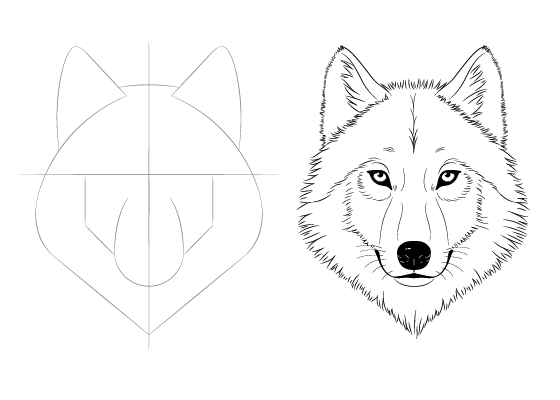 Wolf face drawing tutorial