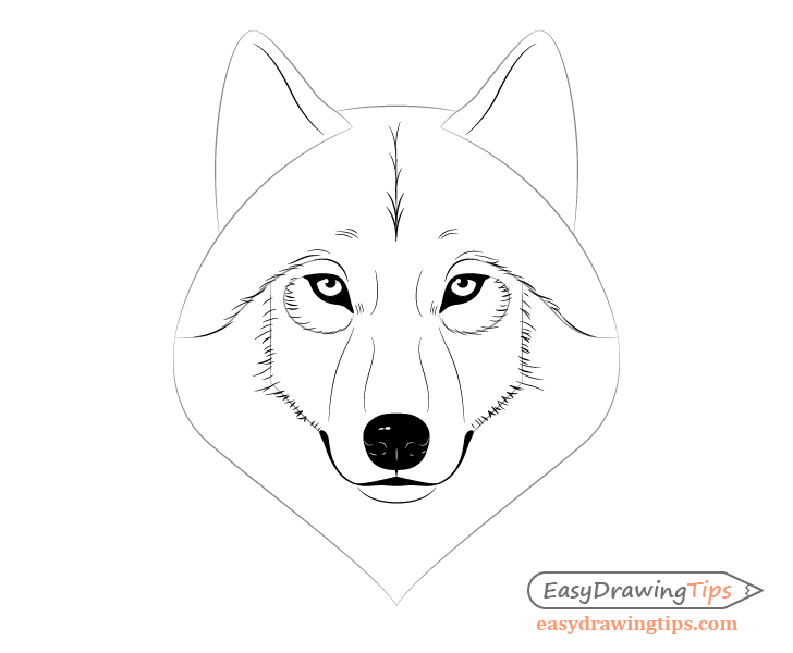 Wolf face inner fur drawing