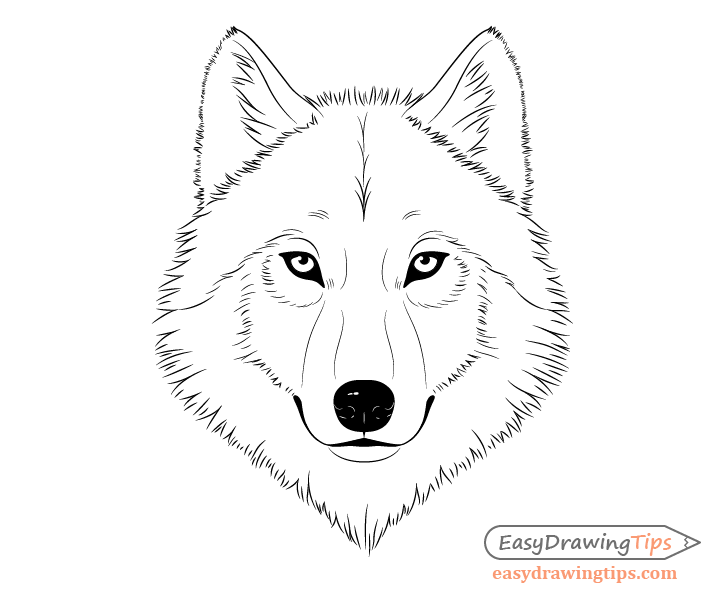 Wolf face line drawing
