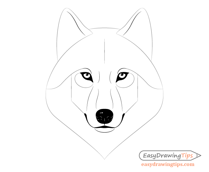 Wolf facial features drawing
