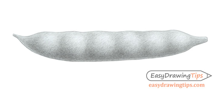 Bean pod drawing