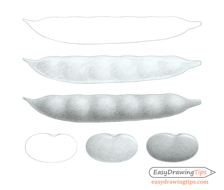 Beans drawing step by step
