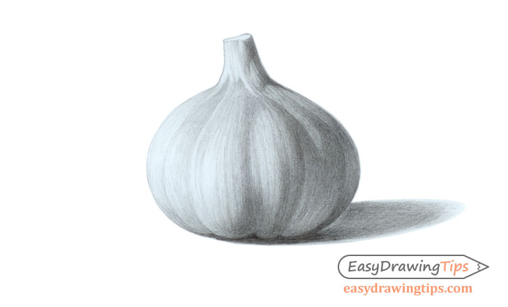 Garlic drawing