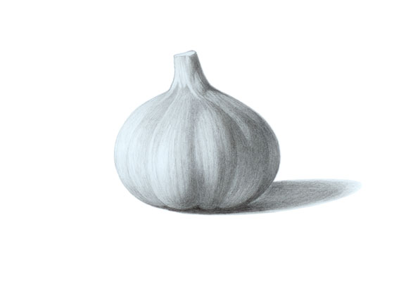 Garlic drawing tutorial