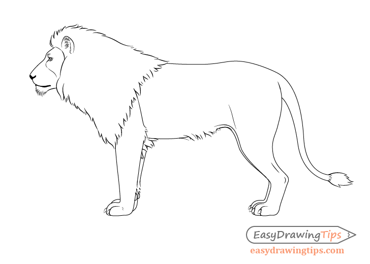 Lion drawing no whiskers