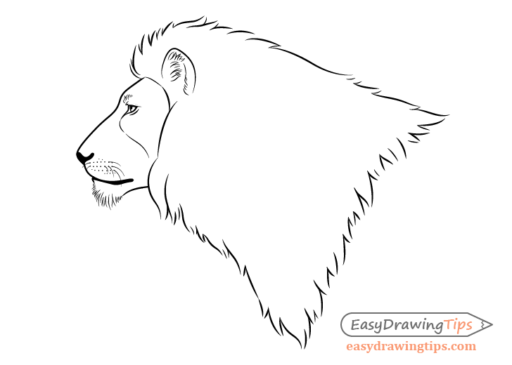 Lion face side view drawing