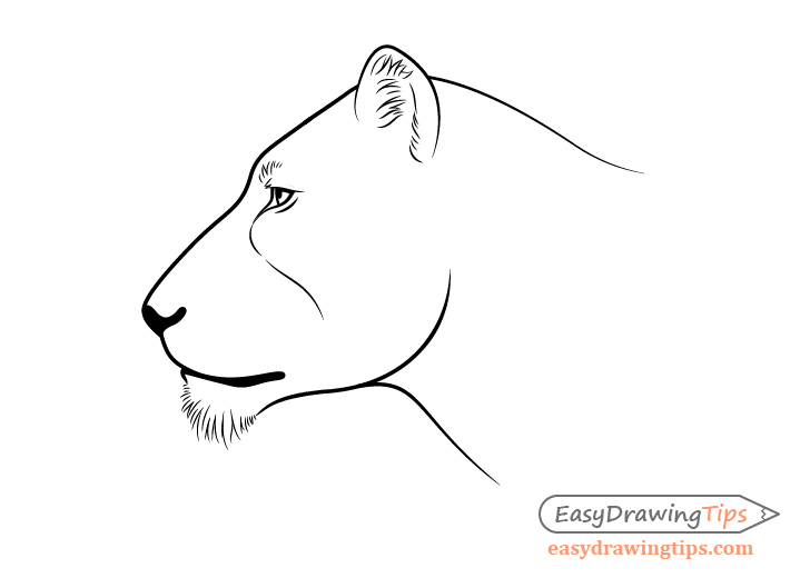 How To Draw A Lion Full Body Step By Step Easydrawingtips Find this pin and more on africa map lion face outline tattoo by tattoomaze. to draw a lion full body step by step