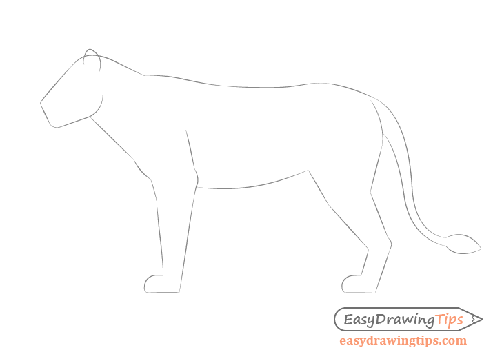 Lion full body construction drawing