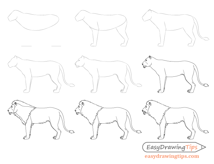How To Draw A Lion Full Body Step By Step Easydrawingtips