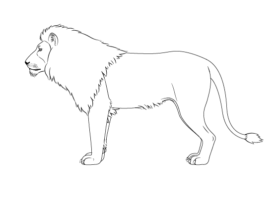Lion drawing tutorial