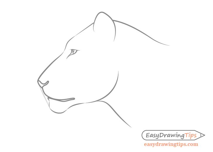 Lion Face Outline