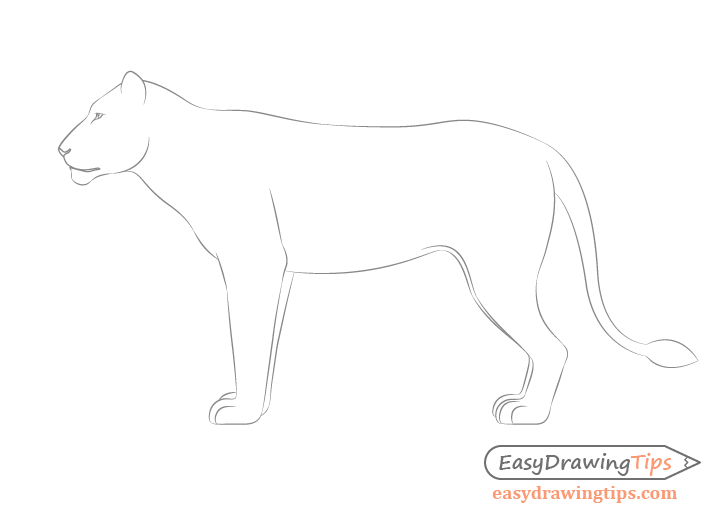 Lion side view drawing facial features