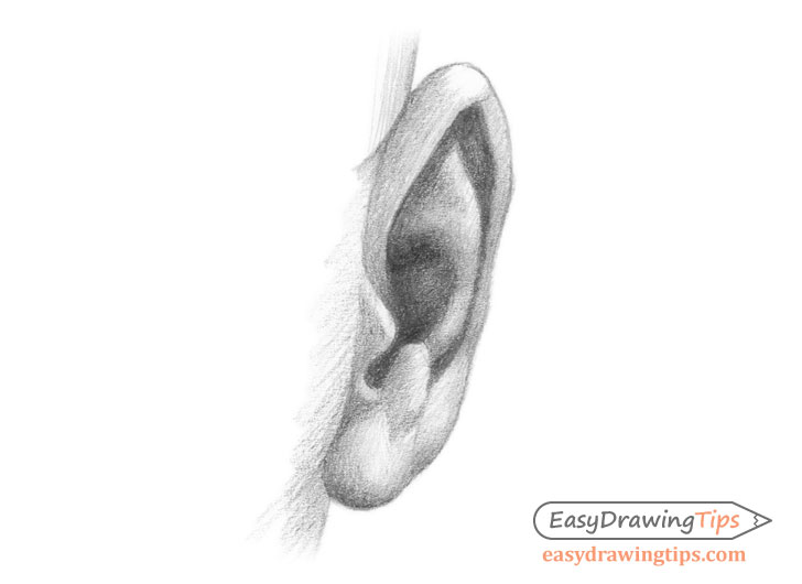 Ear front view drawing