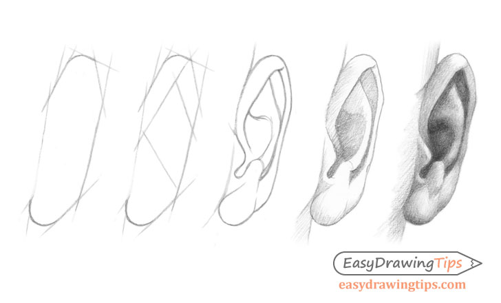 Ear front view drawing step by step