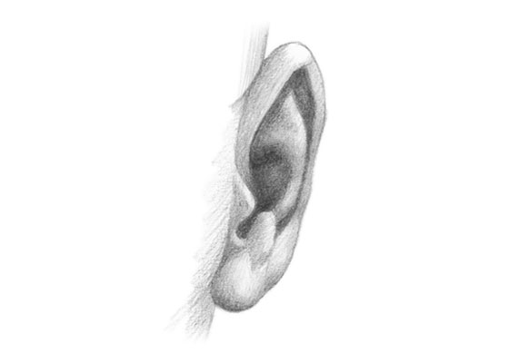 Ear front view drawing tutorial