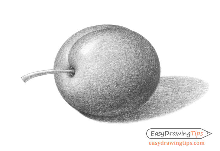 Plum drawing