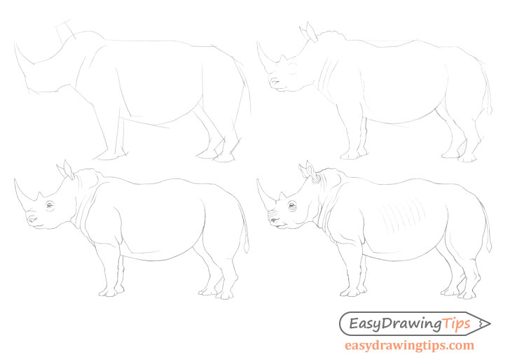 Rhinoceros drawing step by step