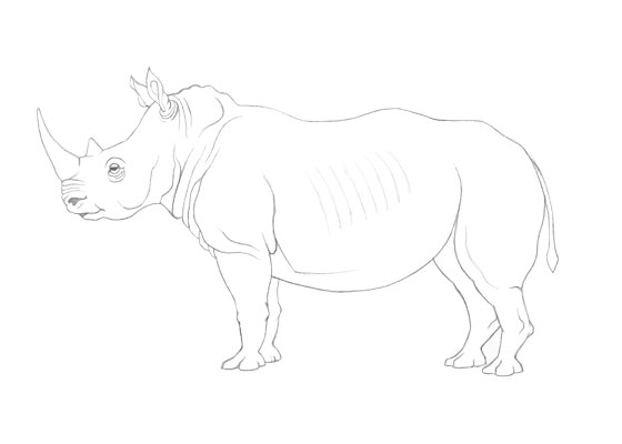 Rhinoceros drawing tutorial