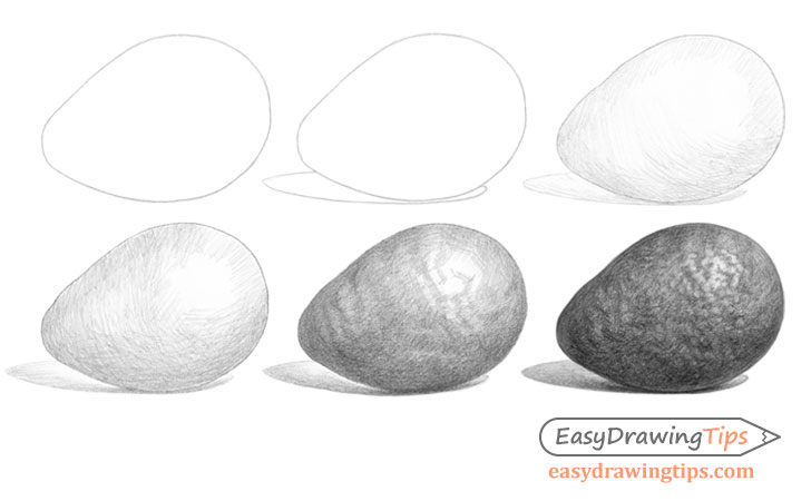 Avocado drawing step by step