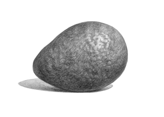 Avocado drawing tutorial
