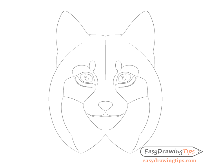 Lynx around eyes details drawing