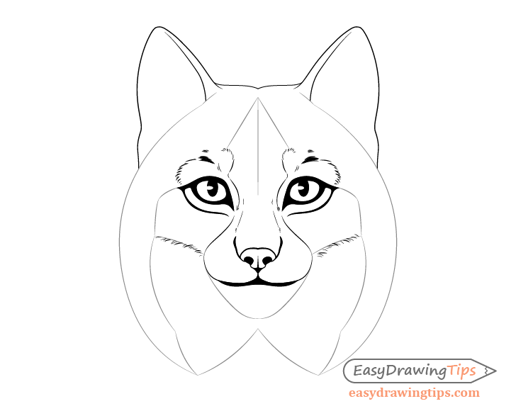 Lynx cheek fur drawing