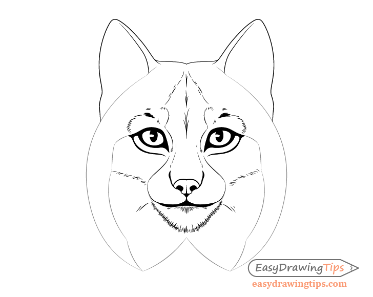 Lynx chin fur drawing