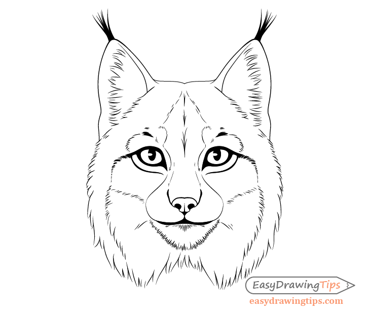 Lynx ear fluff drawing