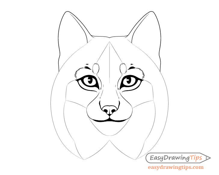 Lynx eyebrow fur drawing