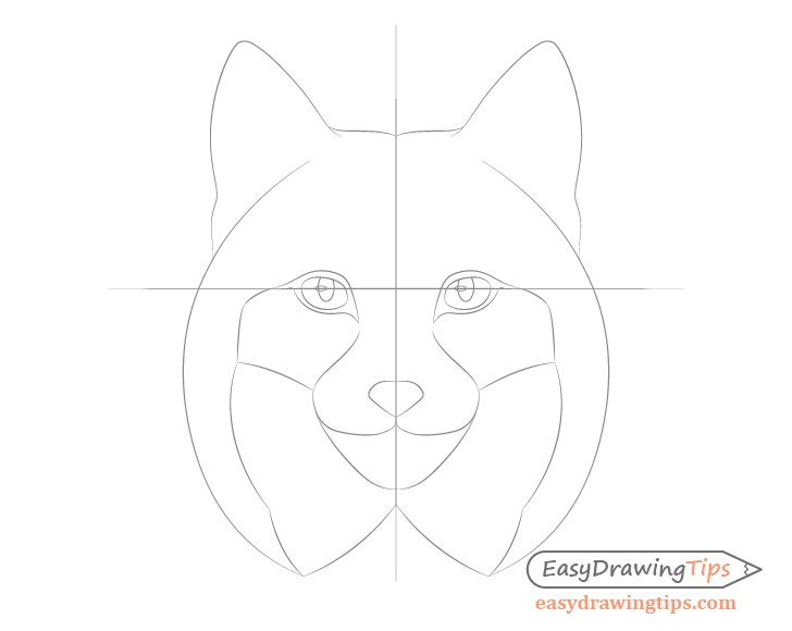 Lynx eyes details and nose drawing
