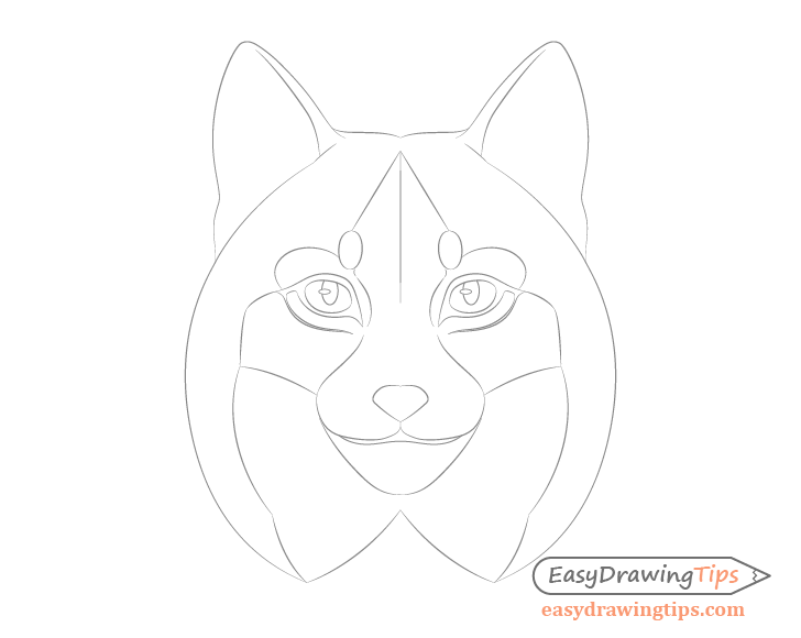 Lynx face details drawing
