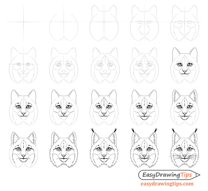 Lynx face drawing step by step