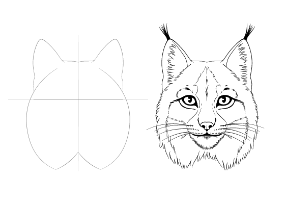 Lynx face drawing tutorial