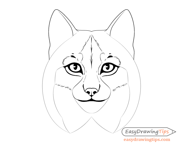 Lynx forehead fur drawing