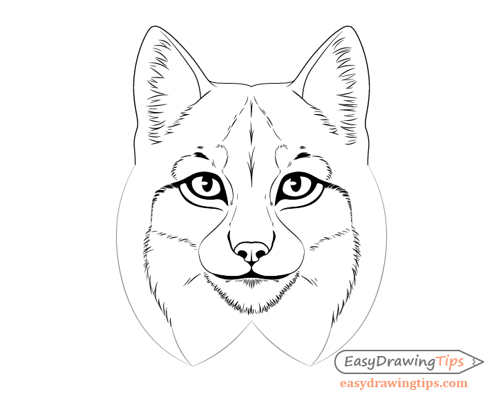 Lynx fur pattern drawing