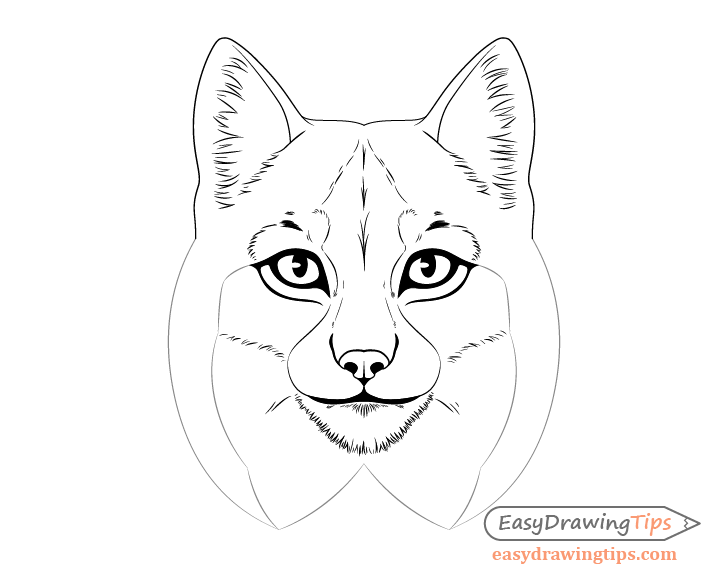 Lynx inner ear fur drawing