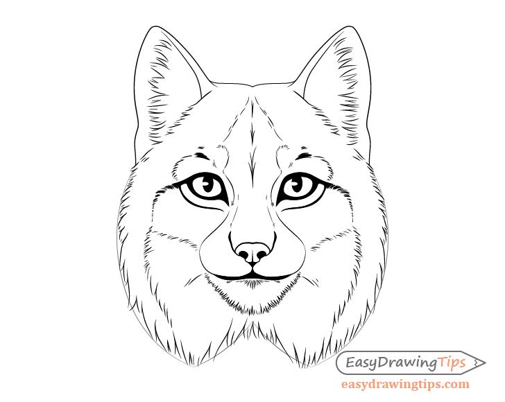 Lynx mane drawing