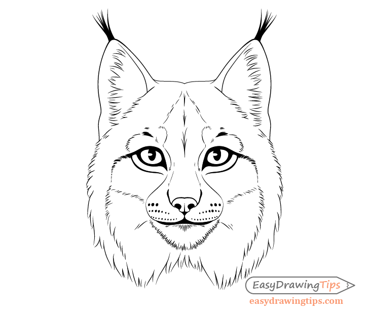 Lynx whiskers spots drawing