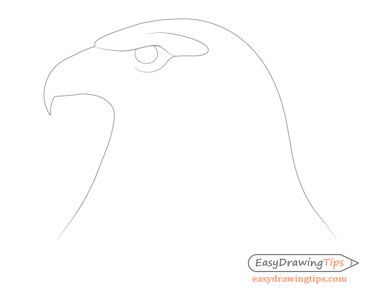 Eagle around eye details drawing