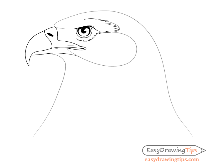 Eagle around eye feather drawing