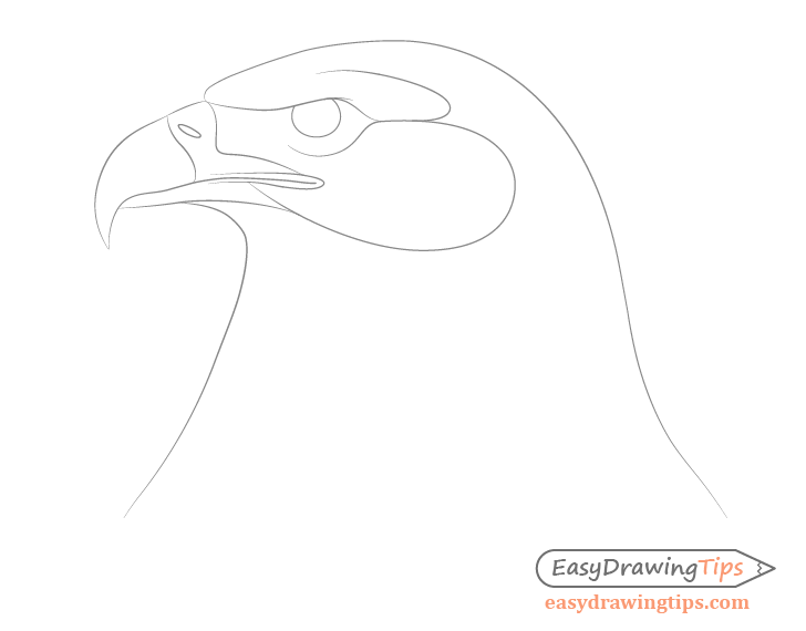 Eagle beak details drawing