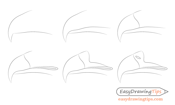 Eagle beak step by step drawing