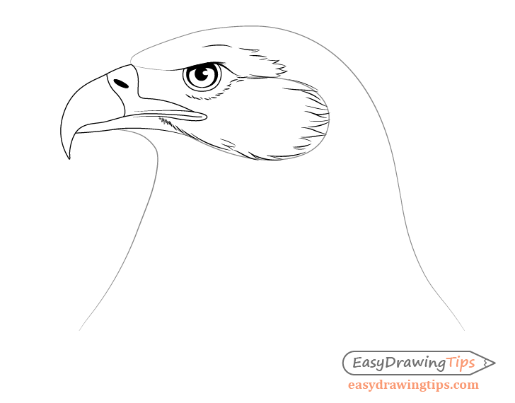 Eagle cheek feathers drawing