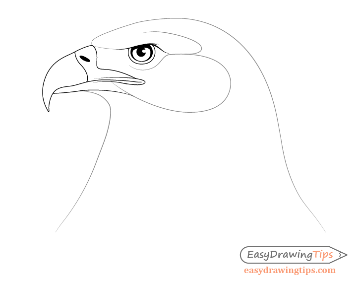 Eagle face outline drawing