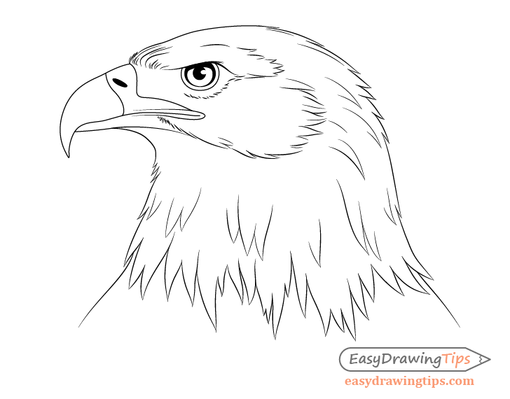 Eagle head drawing