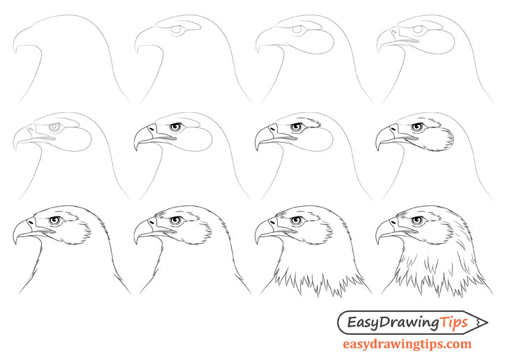 Eagle head drawing step by step